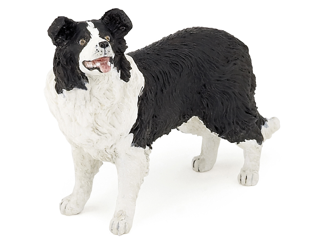 Hund Border Collie