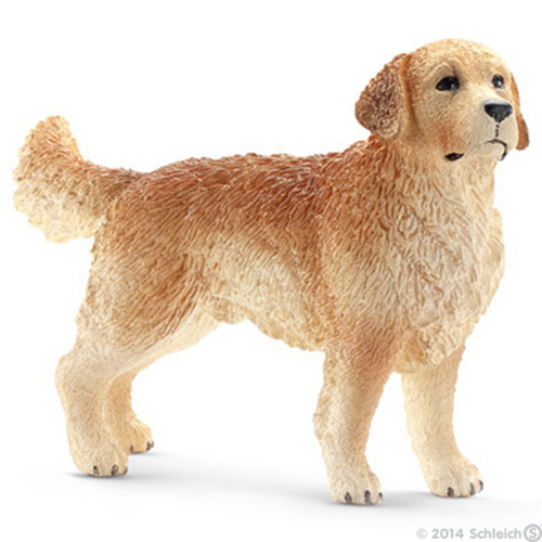 Golden retriever hane